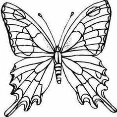 Butterfly Drawings In Pencil