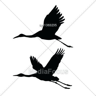 380x380 drawing of a fly crane bird flying drawing crane bird flying