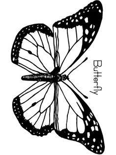 Butterfly Life Cycle Drawing