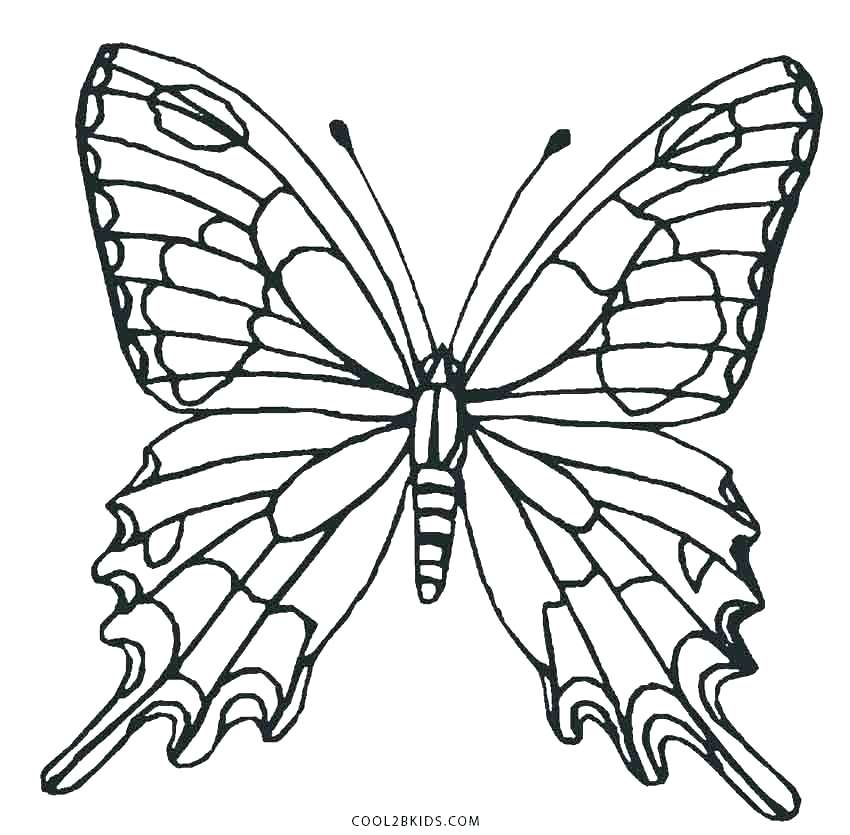 850x835 Butterfly Life Cycle Coloring