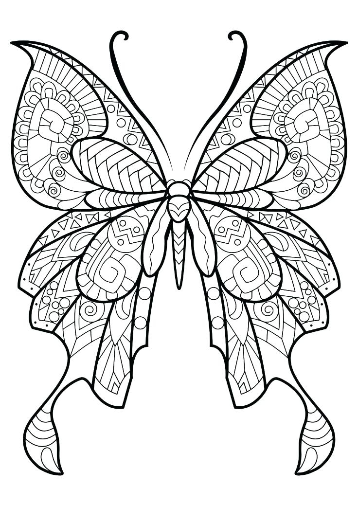 736x1040 Monarch Butterfly Coloring Pages Fun Time