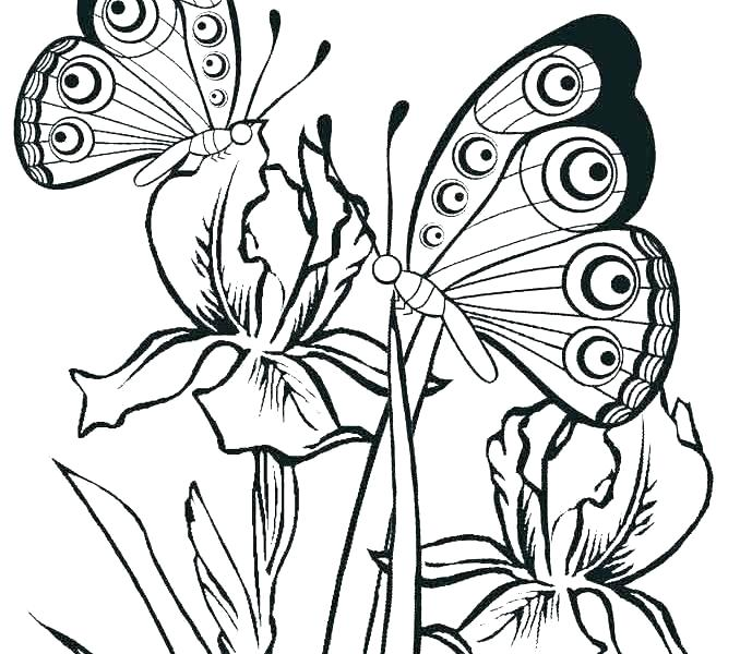 678x600 Butterfly Coloring Pages Printable