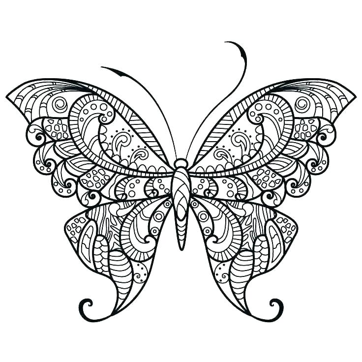 736x736 Butterfly Coloring Pages Printable
