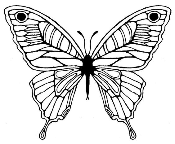 564x465 Butterfly Drawing Clipart