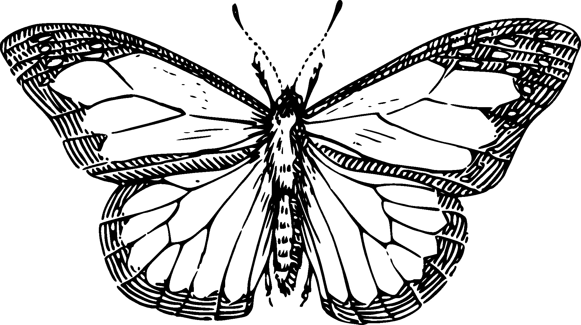 1969x1101 Arts Butterfly Outline Drawing Exquisite Free Butterfly Outline
