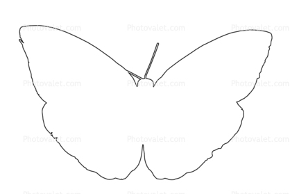 418x279 Butterfly Outline, Line Drawing, Shape Images, Photography, Stock