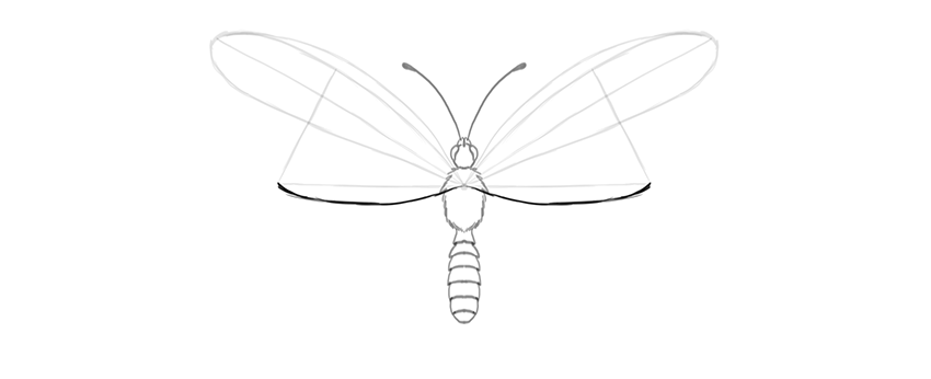 850x346 How To Draw A Butterfly Step