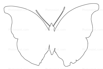 418x279 Outline Butterfly, Wings, Line Drawing, Shape Images, Photography