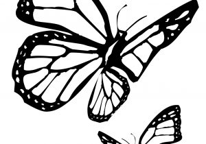 300x210 Sketches Of Butterflies Flying Line Drawing Pencil And Charcoal