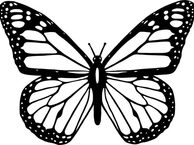 640x480 Butterfly Clipart Line Drawing