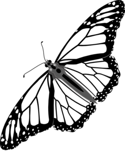 Butterfly Line Drawing Images