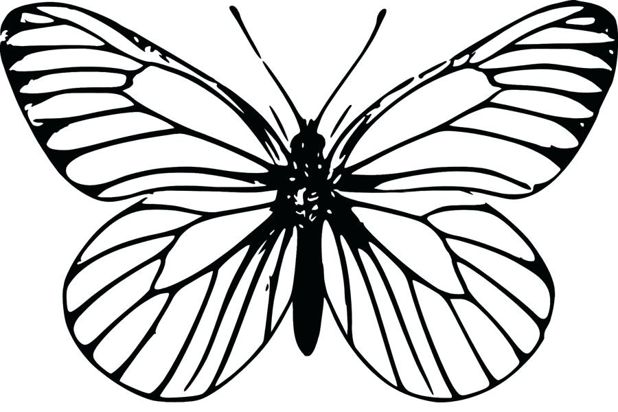 900x600 butterfly outline butterfly outline icons set butterfly line