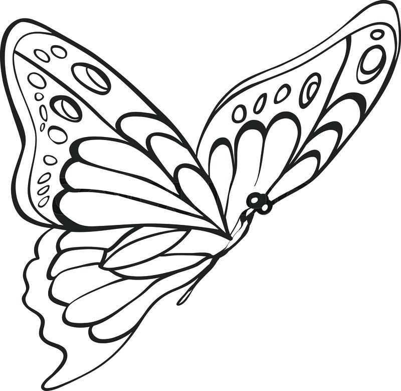 800x779 Butterfly Sketch Butterfly Sketch Small Butterfly Tattoo Sketch