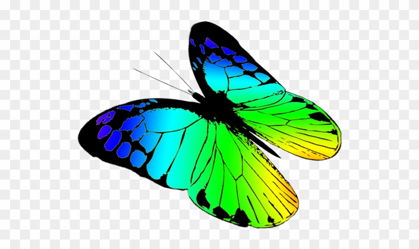 840x499 Free Butterflies Drawing, Free Butterfly Clipart