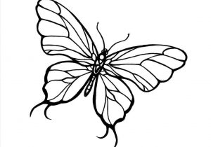 300x210 Huge Collection Of 'butterfly Drawing Simple' Download More Than
