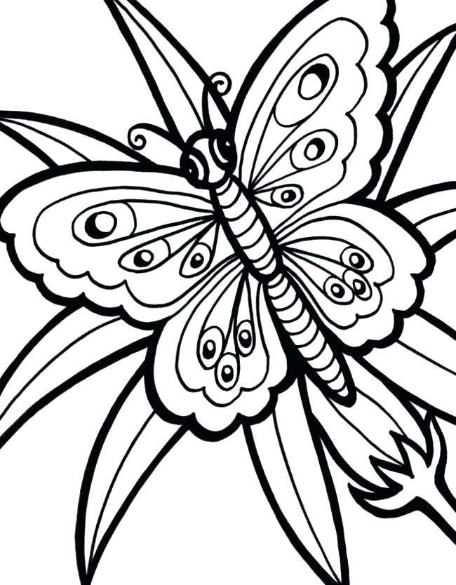 650x834 Butterfly Outline Drawing