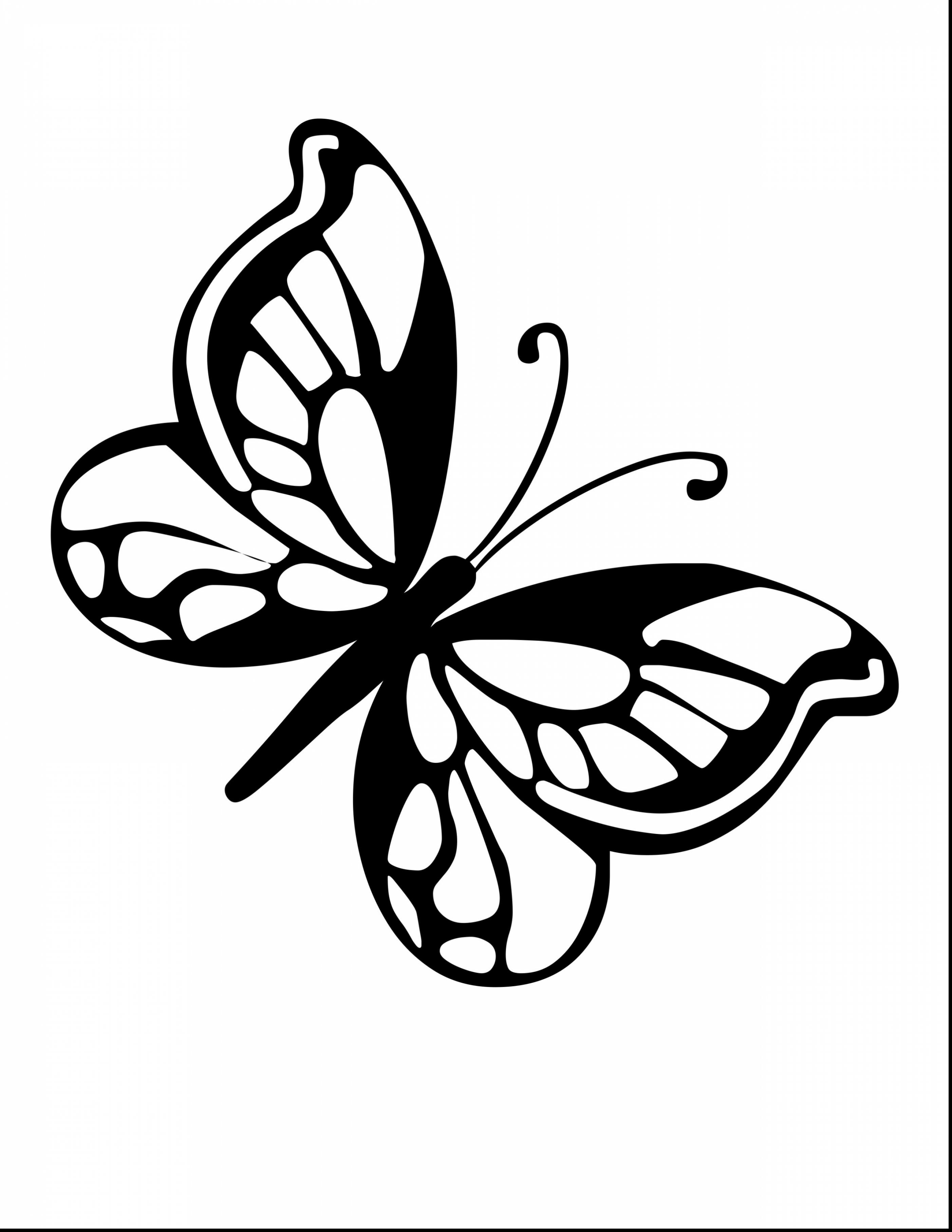 2805x3630 Butterflies Drawings Save Collection Of Small Butterfly Drawing