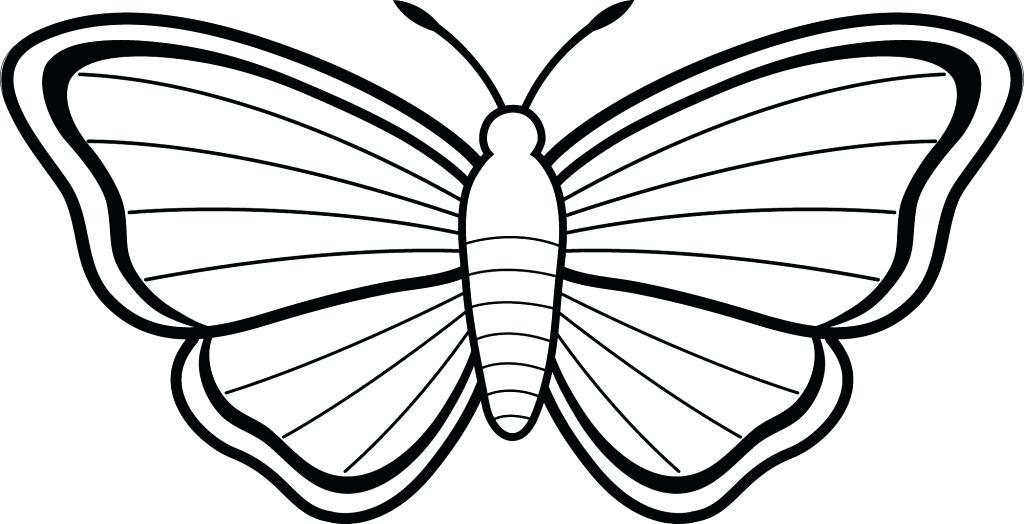 1024x524 Butterflies Drawings