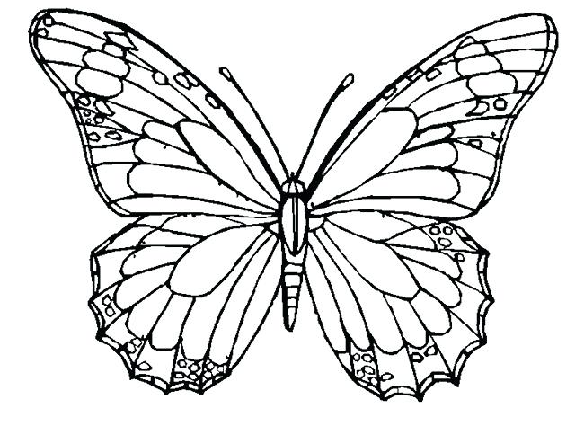 650x474 Butterfly Wing Template Butterfly Wing Template Download Butterfly