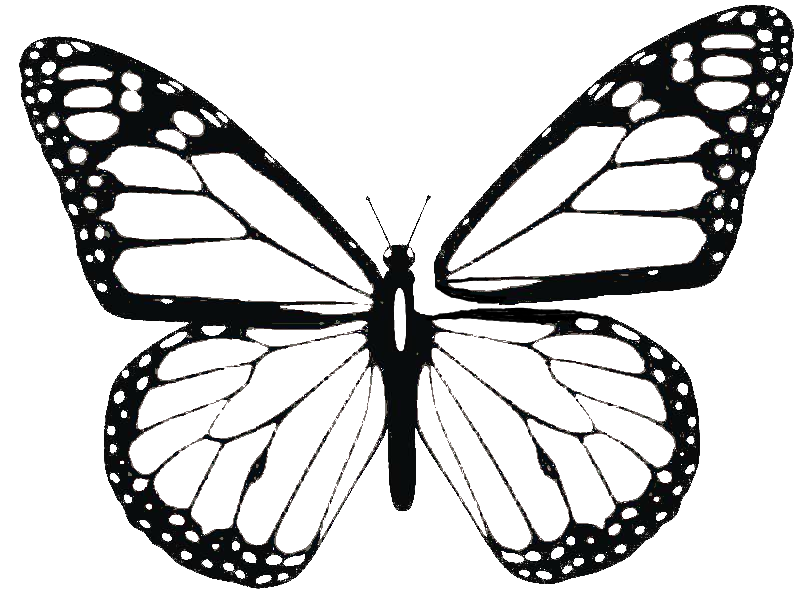 800x603 Collection Of Free Drawing Butterflies Butterfly Wing Download