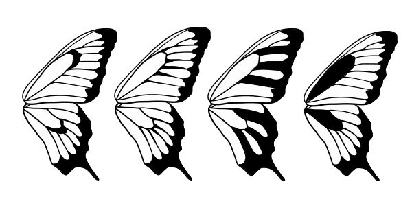 600x303 Pics For Gt Butterfly Wing Pattern Black And White Horns, Wings