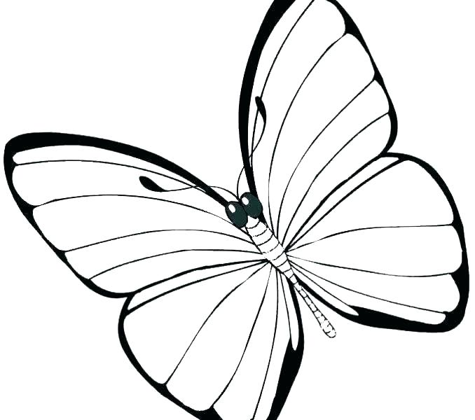 678x600 Butterfly Wings Coloring Pages Running