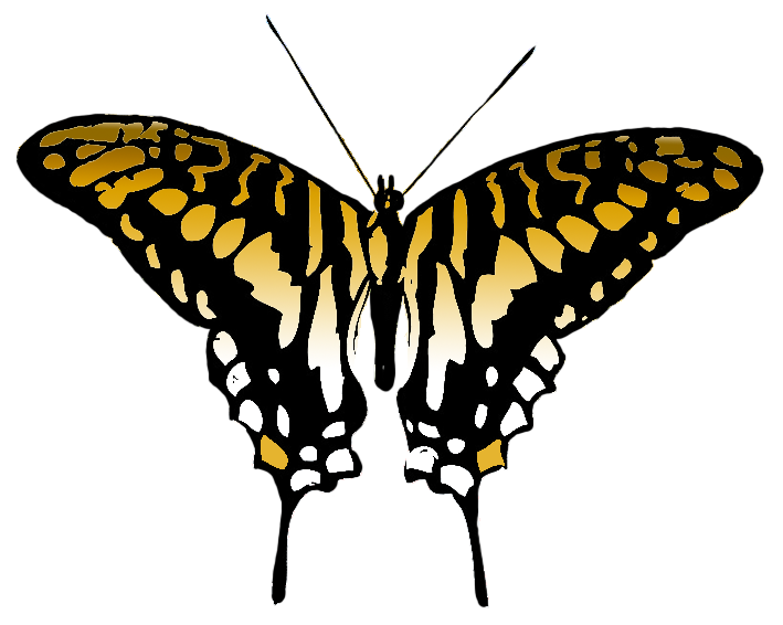 709x566 Butterfly Clipart