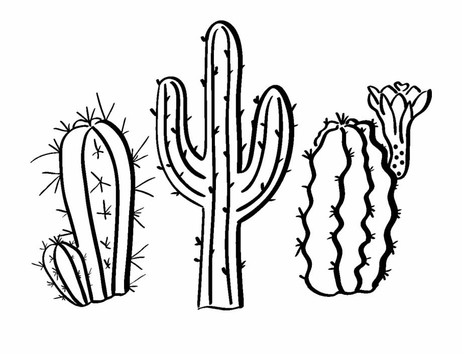 920x706 sticker boheme cactus du desert ambiance sticker