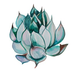 260x260 Drawing, Cactus, Plant, Transparent Png Image Clipart Free Download