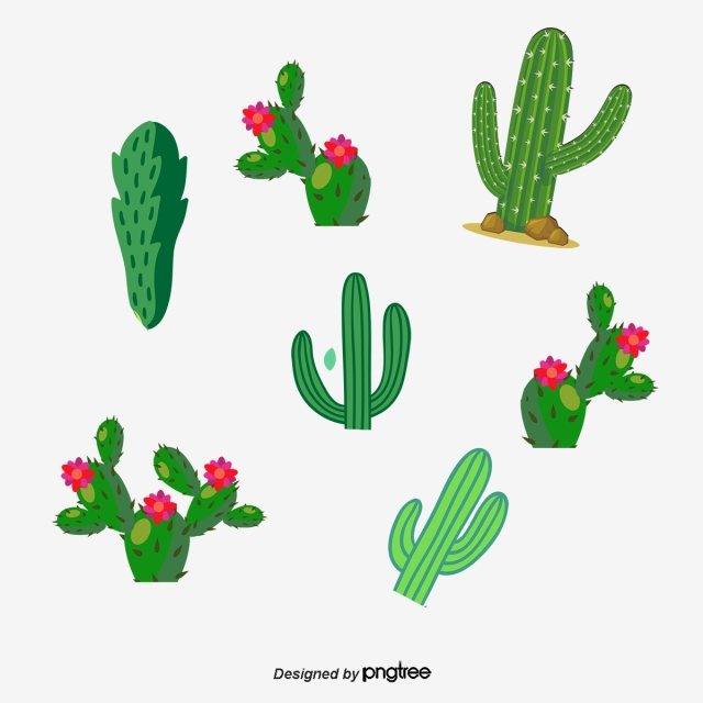 640x640 Drawing Cactus Flowering Cactus Collection, Watercolor Cactus