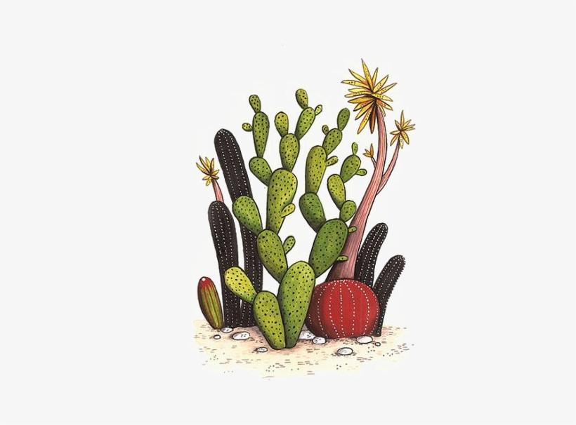 820x606 Cactaceae Drawing Watercolor Painting Succulent Plant