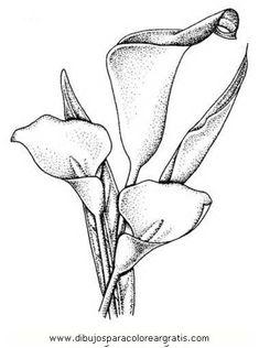 Calla Lily Drawing Pattern