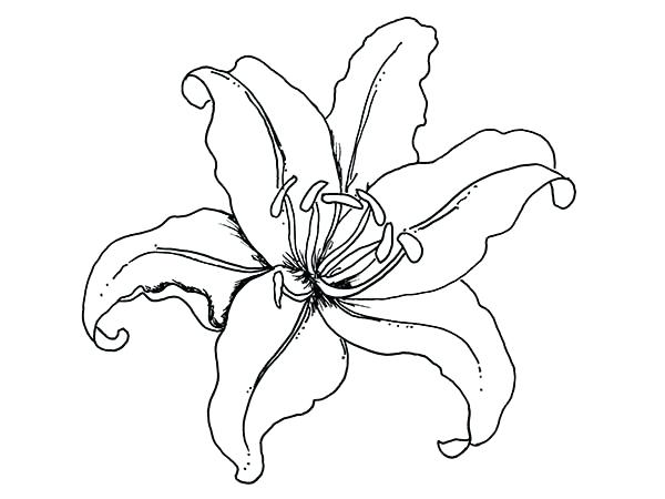 600x450 calla lily coloring pages lily flower coloring pages coloring lily