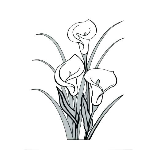 Calla Lily Flower Drawing Free Download On Clipartmag