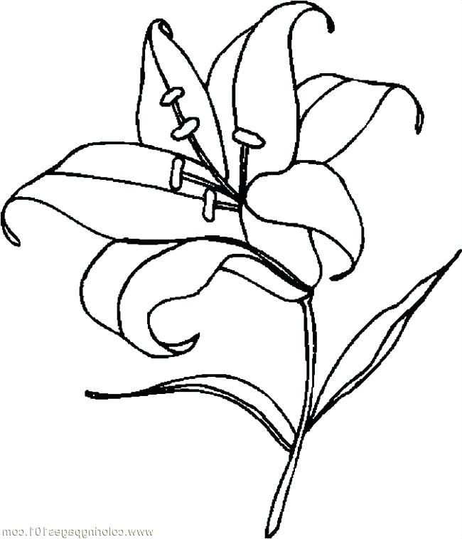 Calla Lily Line Drawing Free Download On Clipartmag