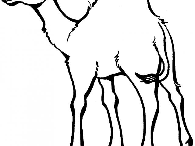 640x480 camels clipart