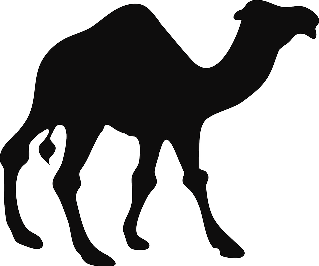 640x534 camels drawing stencil huge freebie! download for powerpoint