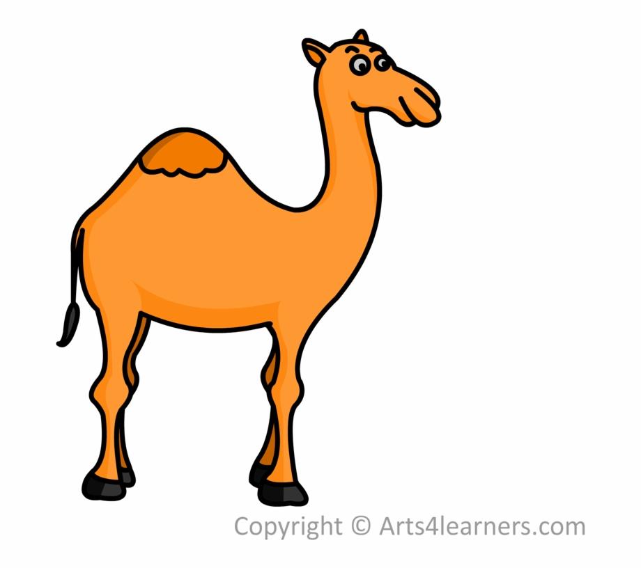 Camel Cartoon Drawing   Free download best Camel Cartoon