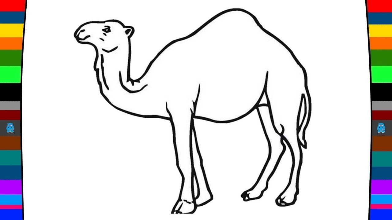 1280x720 Animal Coloring Pages How To Draw A Camel Drawing