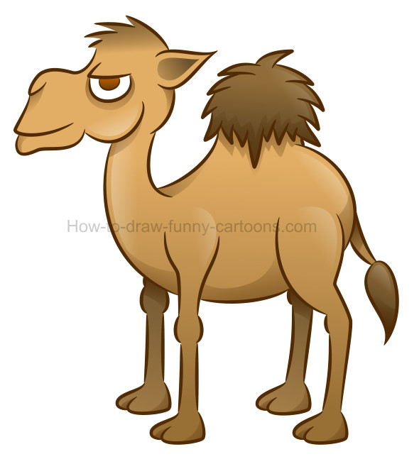 590x647 How To Draw A Camel Cartoon Illustration