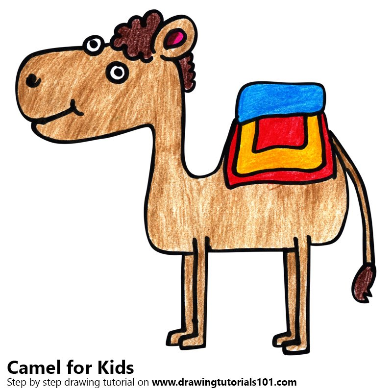 800x800 Learn How To Draw A Camel For Kids