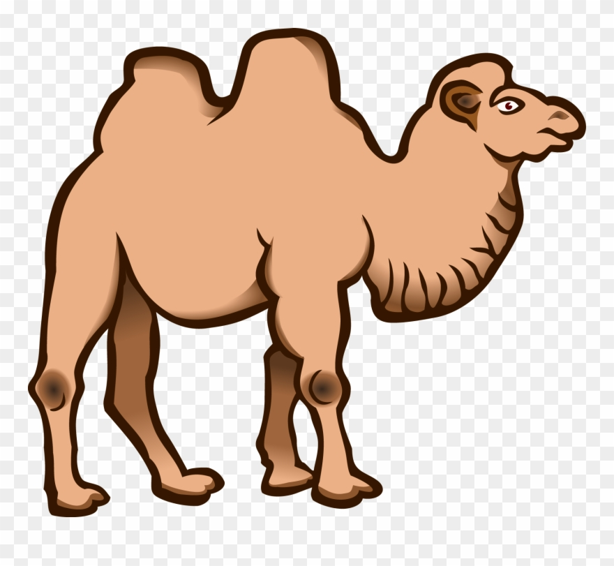 880x811 Bactrian Camel Dromedary Cartoon Download Drawing