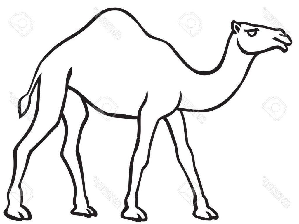 Camel Drawing | Free download best Camel Drawing on