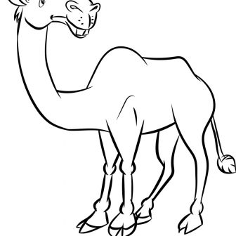 Camel Drawing Outline | Free download best Camel Drawing Outline on