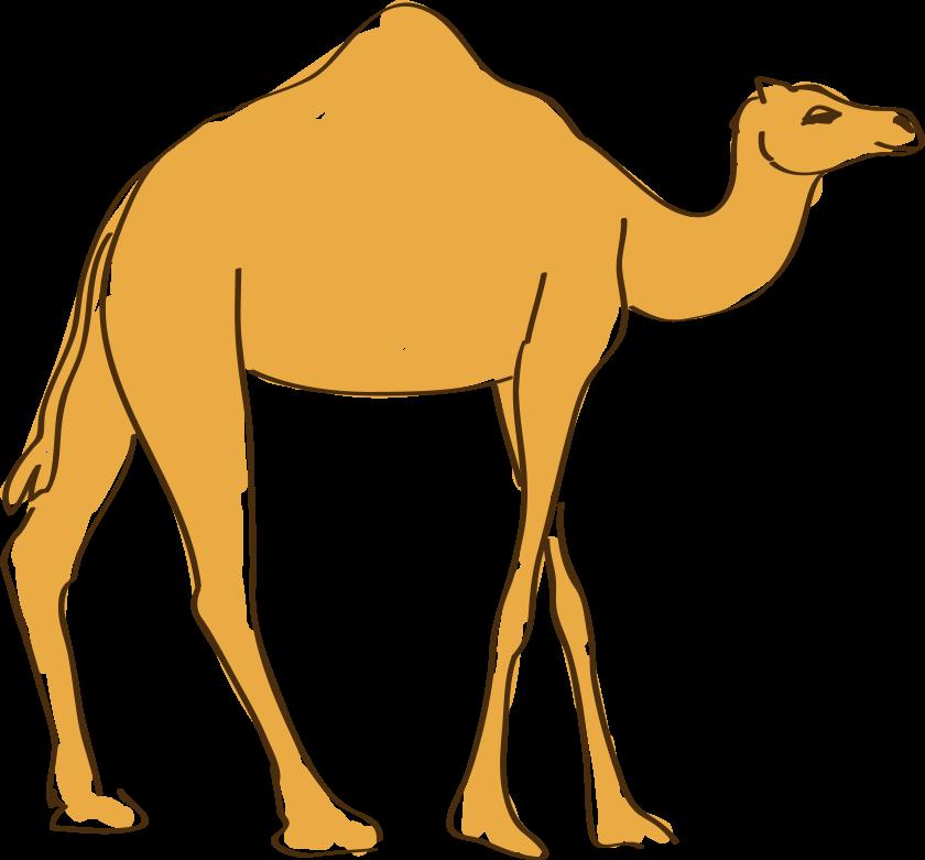 Camel In Desert Drawing