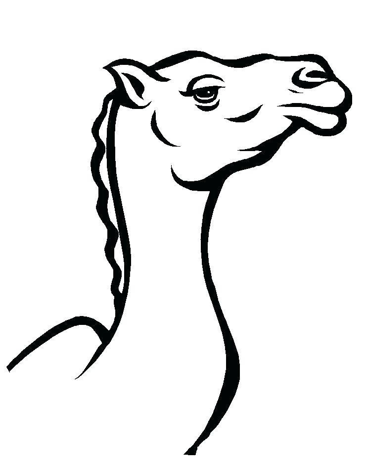 Camel Line Drawing | Free download best Camel Line Drawing