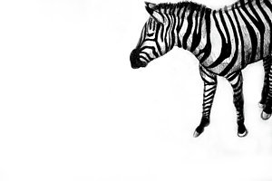 300x200 Camouflage Drawings