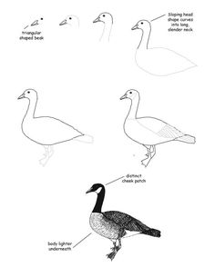 236x305 best canada goose study images canada goose, how to draw