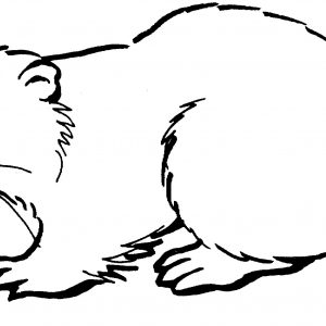 300x300 how to draw a beaver best canadian beaver drawing at getdrawings