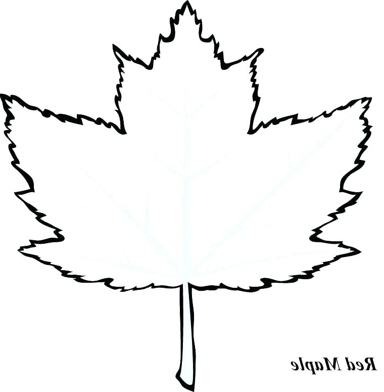 760x775 Maple Leaf Coloring